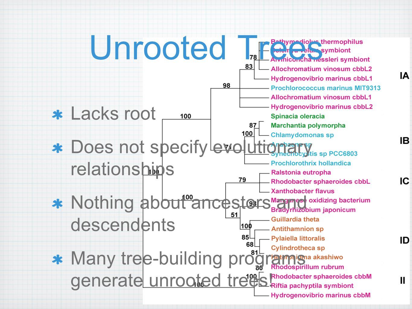 Unrooted Trees Lacks root Does not specify evolutionary relationships Nothing about ancestors and descendents Many tree-building programs generate unrooted trees!