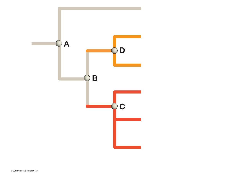 So how do I build a tree? http://www.phylogeny.fr/