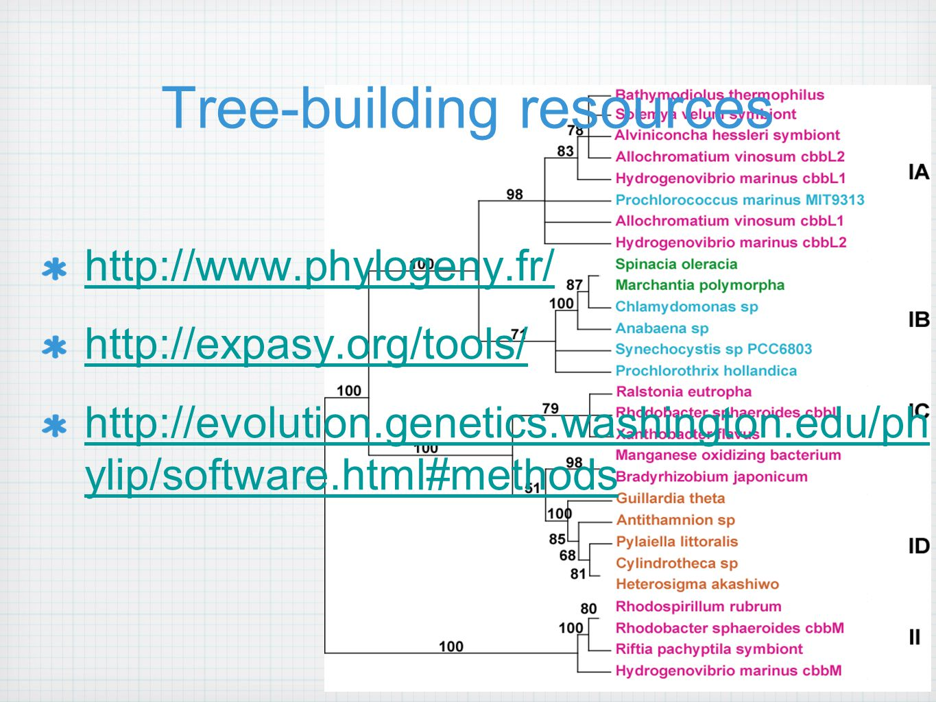 Tree-building resources http://www.phylogeny.fr/ http://expasy.org/tools/ http://evolution.genetics.washington.edu/ph ylip/software.html#methods