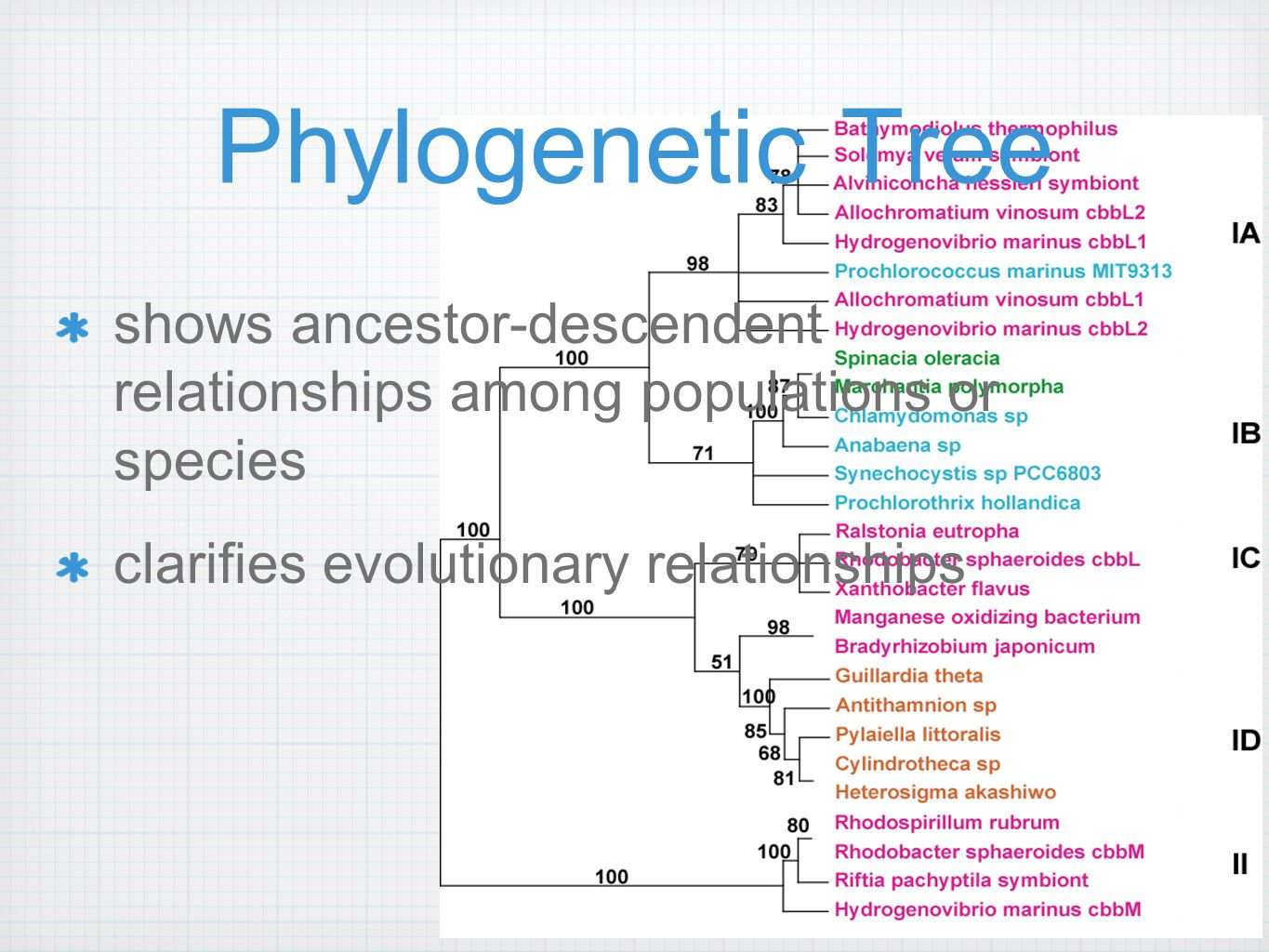 Homologs Orthologs separated by speciation Paralogs produced by gene duplication Xenologs result of horizontal gene transfer