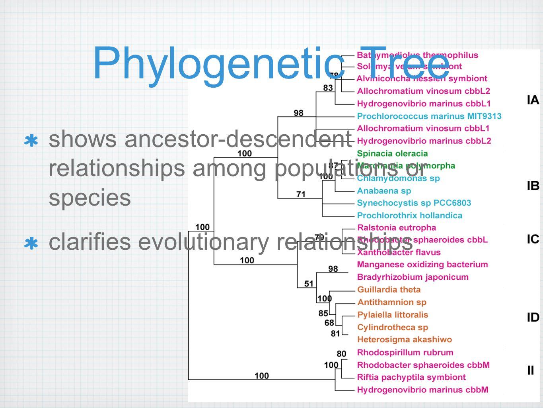 http://www.phylogeny.fr/