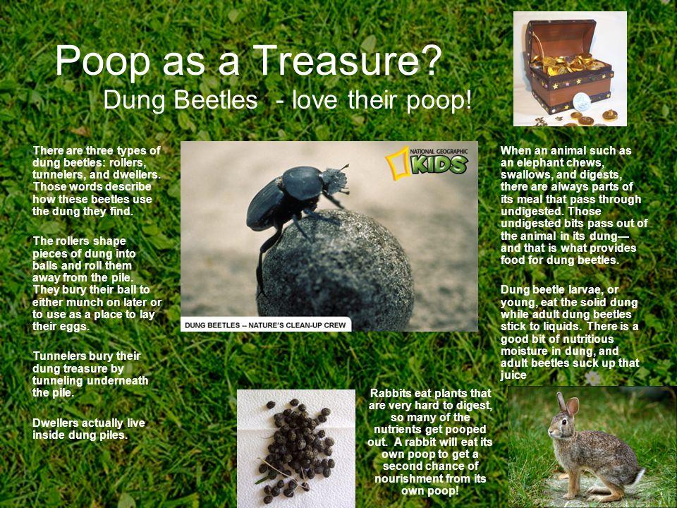 Poop as a Treasure.