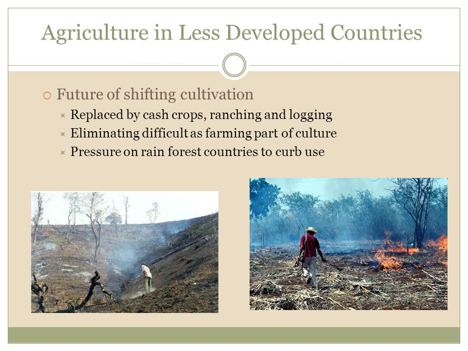 Agriculture in Less Developed Countries  Future of shifting cultivation  Replaced by cash crops, ranching and logging  Eliminating difficult as far