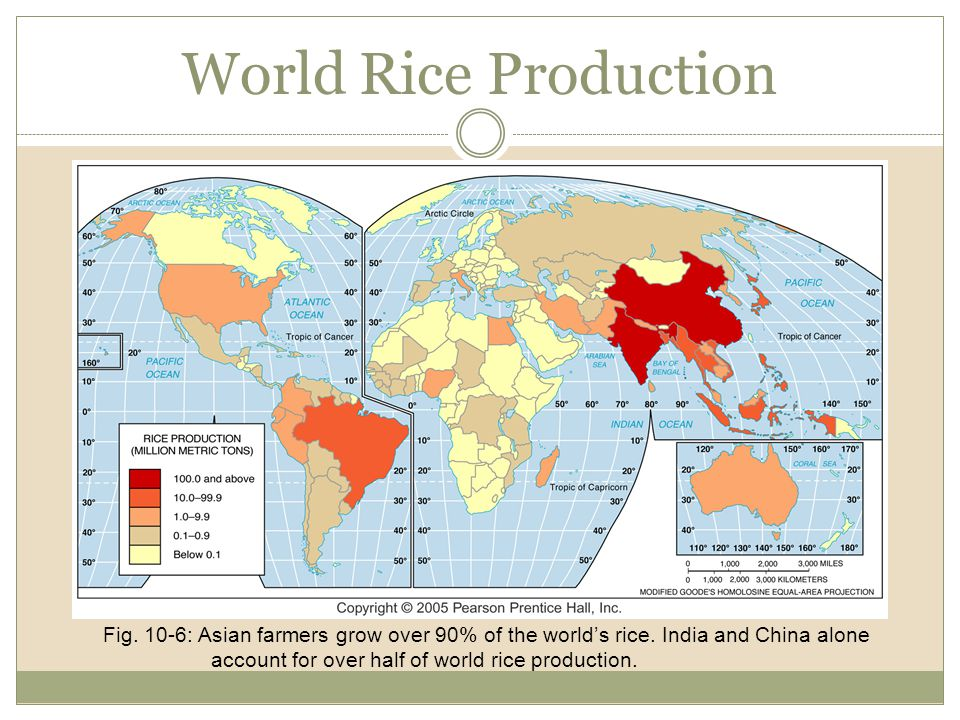 World Rice Production Fig. 10-6: Asian farmers grow over 90% of the world's rice. India and China alone account for over half of world rice production