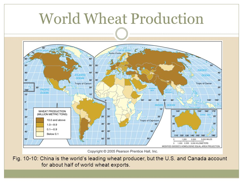 World Wheat Production Fig. 10-10: China is the world's leading wheat producer, but the U.S. and Canada account for about half of world wheat exports.