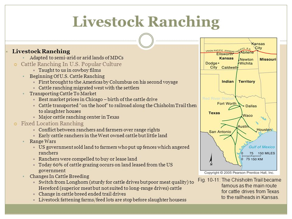  Livestock Ranching Adapted to semi-arid or arid lands of MDCs Cattle Ranching In U.S. Popular Culture Taught to us in cowboy films Beginning Of U.S.