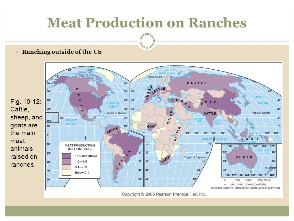 Meat Production on Ranches Fig. 10-12: Cattle, sheep, and goats are the main meat animals raised on ranches.  Ranching outside of the US