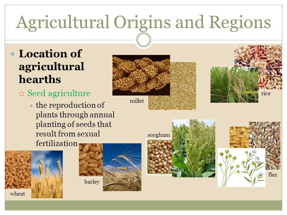 Agricultural Origins and Regions Location of agricultural hearths  Seed agriculture  the reproduction of plants through annual planting of seeds tha