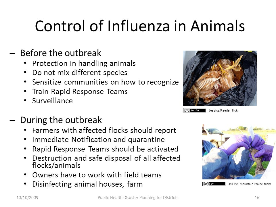 Control of Influenza in Animals – Before the outbreak Protection in handling animals Do not mix different species Sensitize communities on how to recognize Train Rapid Response Teams Surveillance – During the outbreak Farmers with affected flocks should report Immediate Notification and quarantine Rapid Response Teams should be activated Destruction and safe disposal of all affected flocks/animals Owners have to work with field teams Disinfecting animal houses, farm 10/10/2009Public Health Disaster Planning for Districts16 Jessica Reeder, flickr USFWS Mountain Prairie, flickr