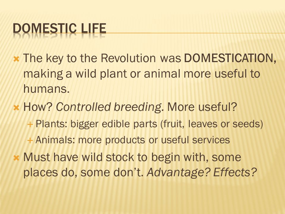  The key to the Revolution was DOMESTICATION, making a wild plant or animal more useful to humans.