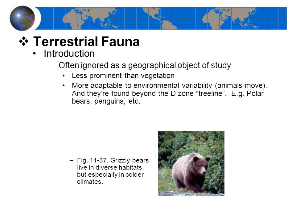  Terrestrial Fauna Introduction –Often ignored as a geographical object of study Less prominent than vegetation More adaptable to environmental variability (animals move).
