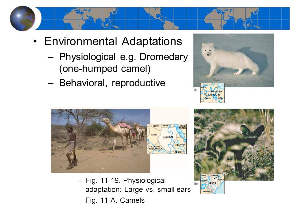 Environmental Adaptations –Physiological e.g.