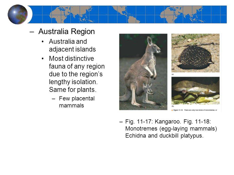 –Australia Region Australia and adjacent islands Most distinctive fauna of any region due to the region's lengthy isolation. Same for plants. –Few pla