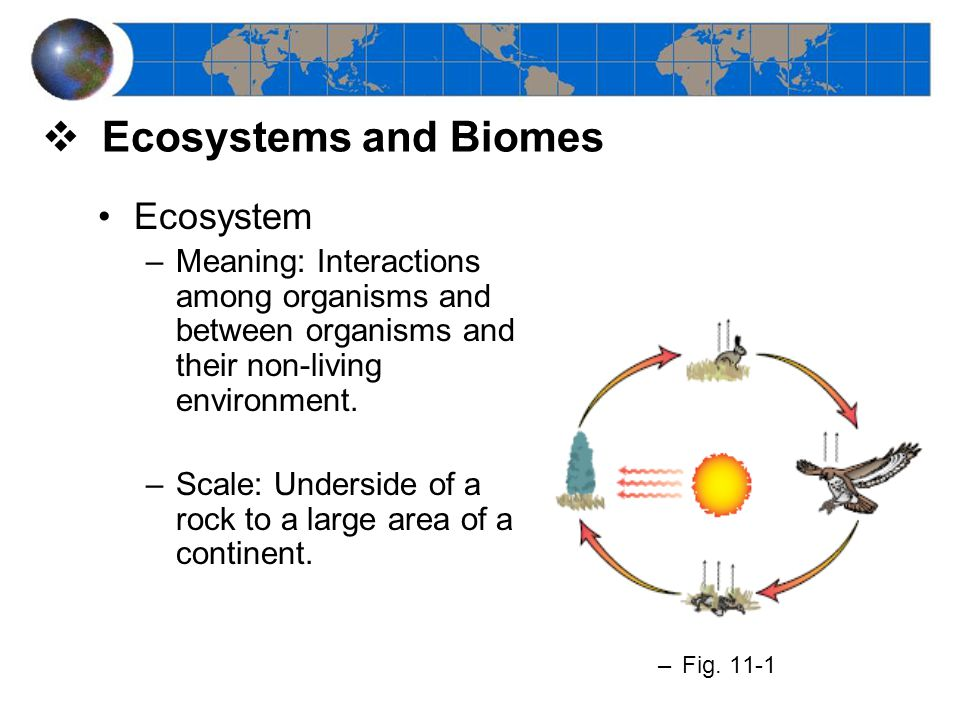  Ecosystems and Biomes Ecosystem –Meaning: Interactions among organisms and between organisms and their non-living environment.