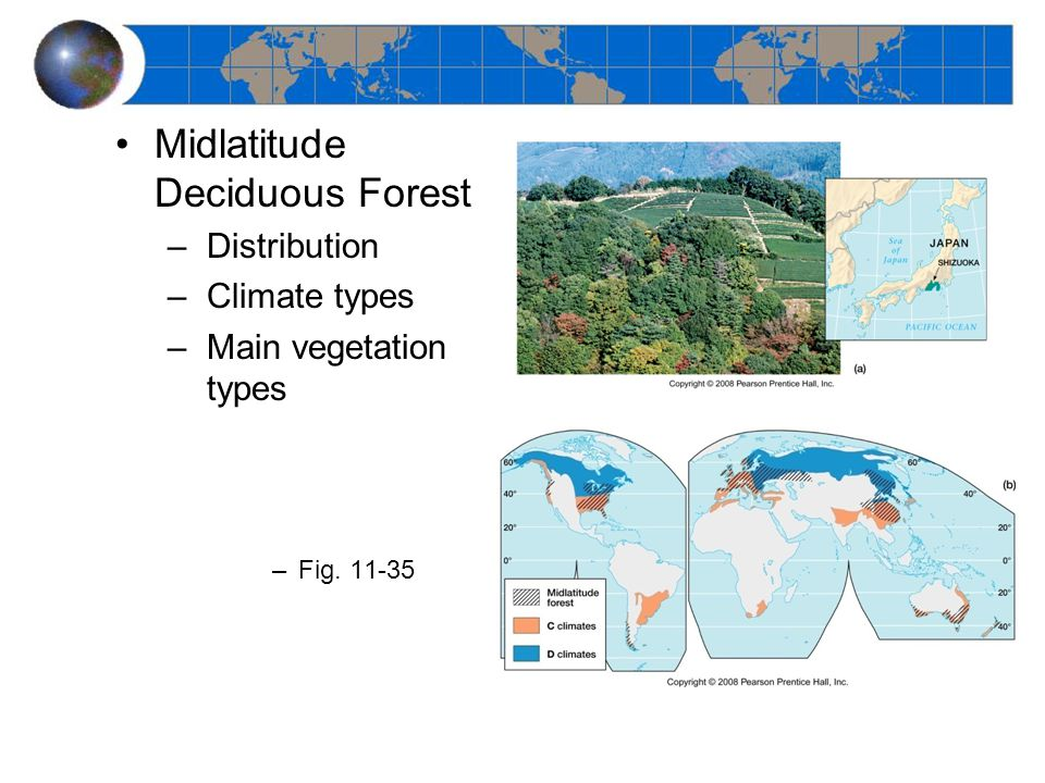 Midlatitude Deciduous Forest –Distribution –Climate types –Main vegetation types –Fig. 11-35