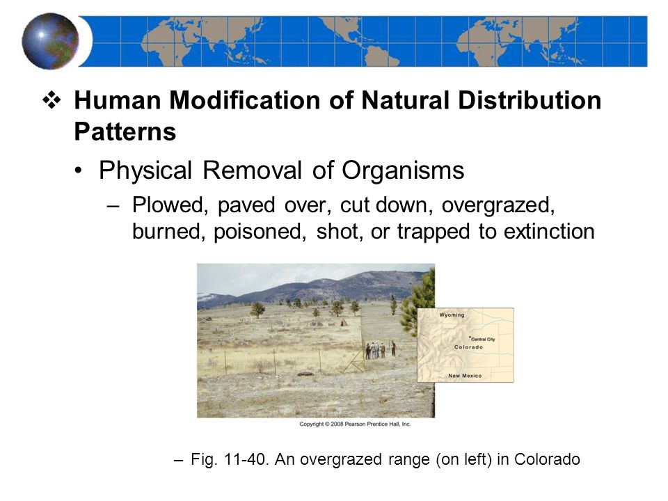  Human Modification of Natural Distribution Patterns Physical Removal of Organisms –Plowed, paved over, cut down, overgrazed, burned, poisoned, shot, or trapped to extinction –Fig.