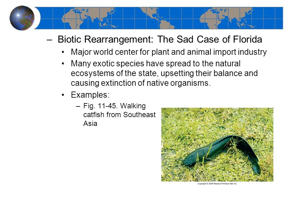 –Biotic Rearrangement: The Sad Case of Florida Major world center for plant and animal import industry Many exotic species have spread to the natural