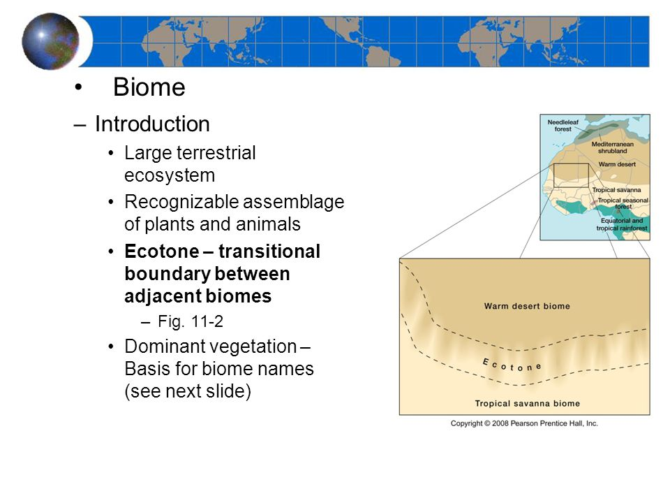 Biome –Introduction Large terrestrial ecosystem Recognizable assemblage of plants and animals Ecotone – transitional boundary between adjacent biomes