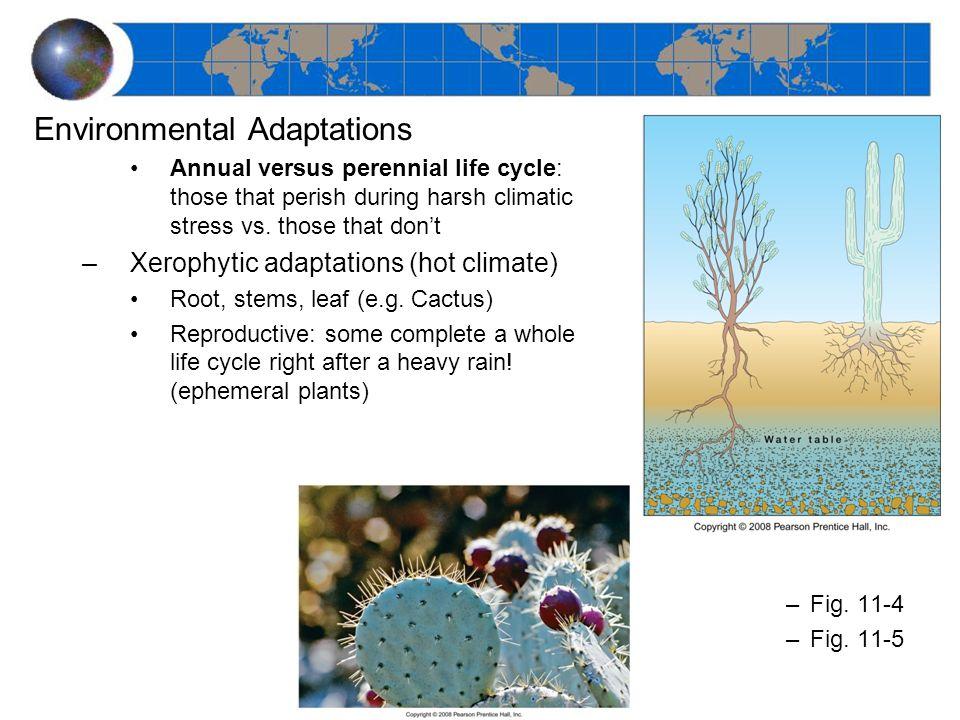 Environmental Adaptations Annual versus perennial life cycle: those that perish during harsh climatic stress vs. those that don't –Xerophytic adaptati