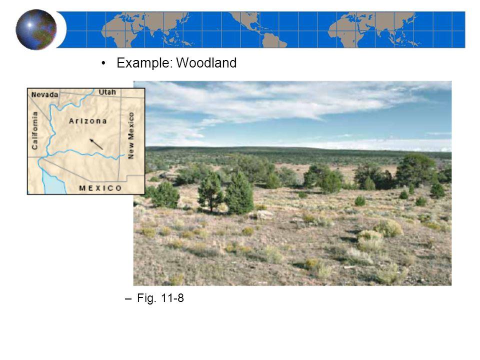 Example: Desert –Fig. 11-9