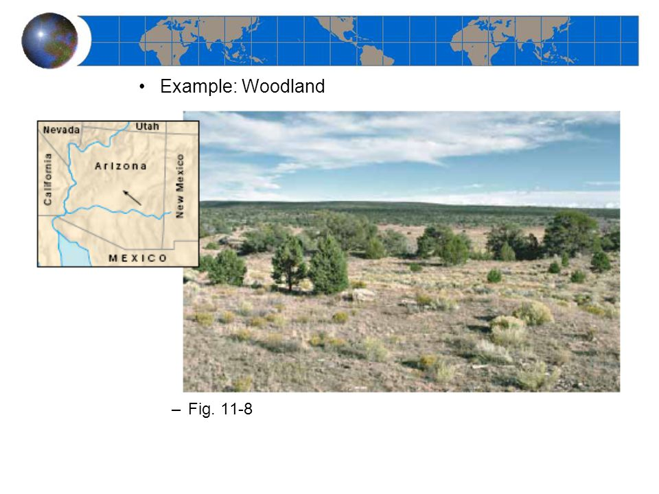 Midlatitude Deciduous Forest –Distribution –Climate types –Main vegetation types –Fig. 11-35