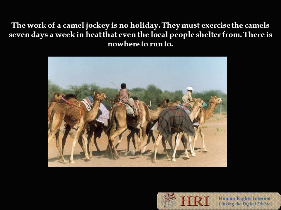 The work of a camel jockey is no holiday.