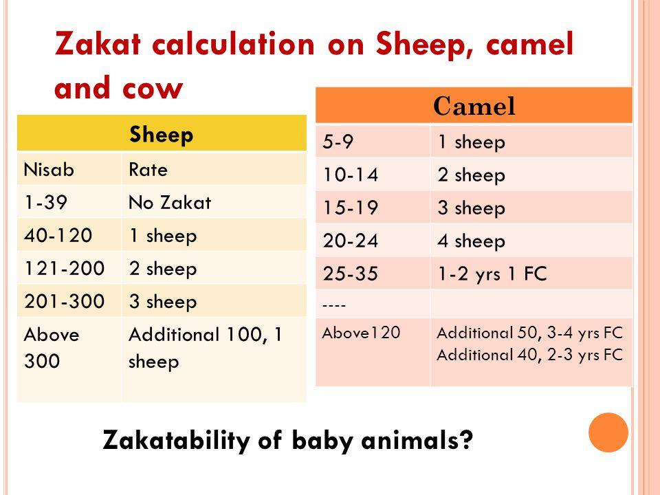 Zakat calculation on Sheep, camel and cow Sheep NisabRate 1-39No Zakat 40-1201 sheep 121-2002 sheep 201-3003 sheep Above 300 Additional 100, 1 sheep C