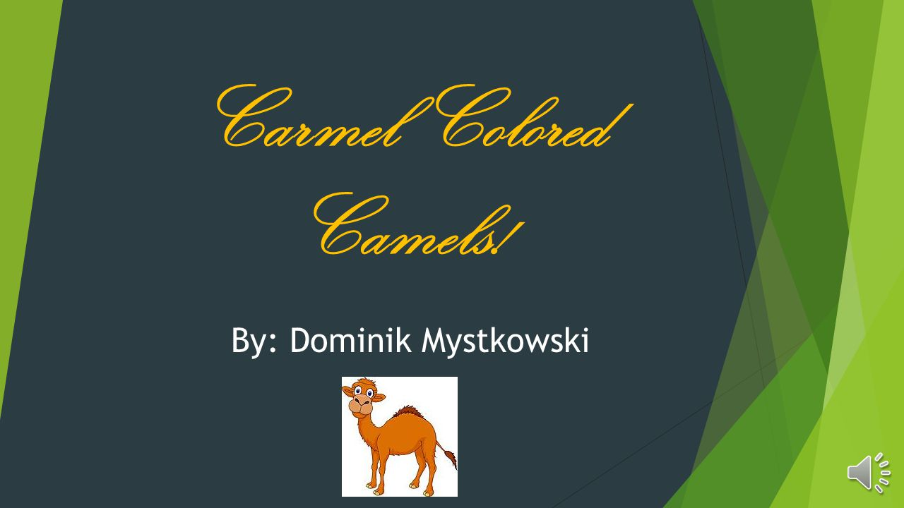 Carmel Colored Camels! By: Dominik Mystkowski