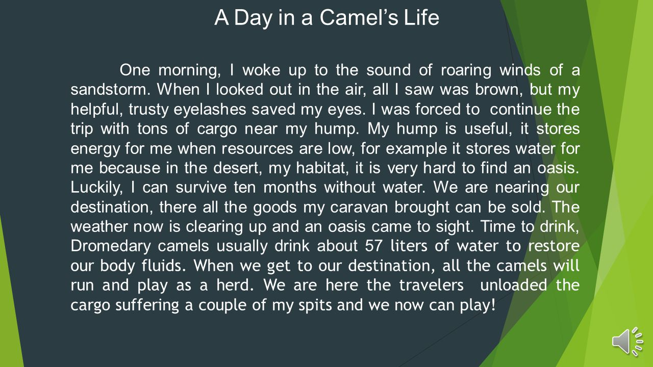 A Day in a Camel's Life One morning, I woke up to the sound of roaring winds of a sandstorm.