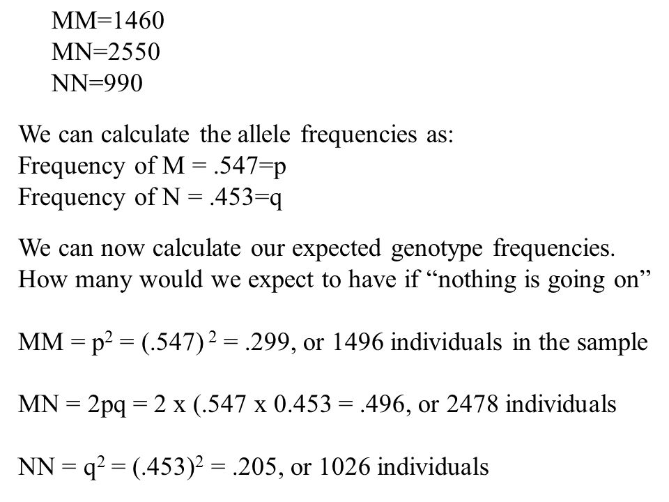 MM=1460 MN=2550 NN=990 We can calculate the allele frequencies as: Frequency of M =.547=p Frequency of N =.453=q We can now calculate our expected gen