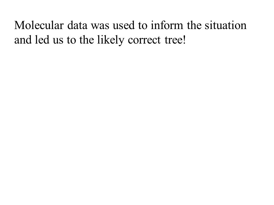 Molecular data was used to inform the situation and led us to the likely correct tree!