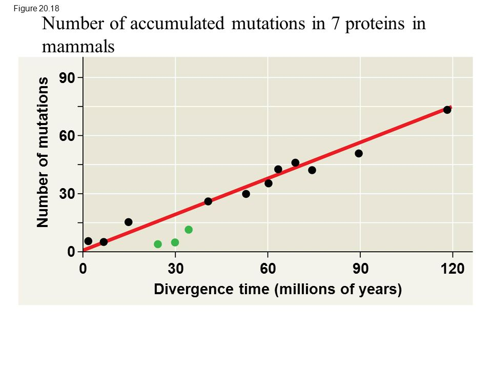 Figure 20.18 Divergence time (millions of years) Number of mutations 1209060300 90 60 30 0 Number of accumulated mutations in 7 proteins in mammals