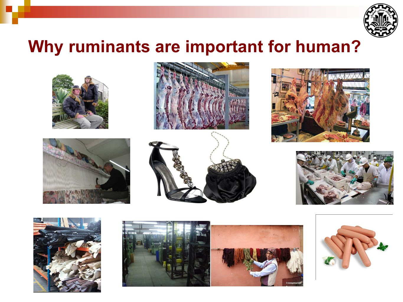 Why ruminants are important for human