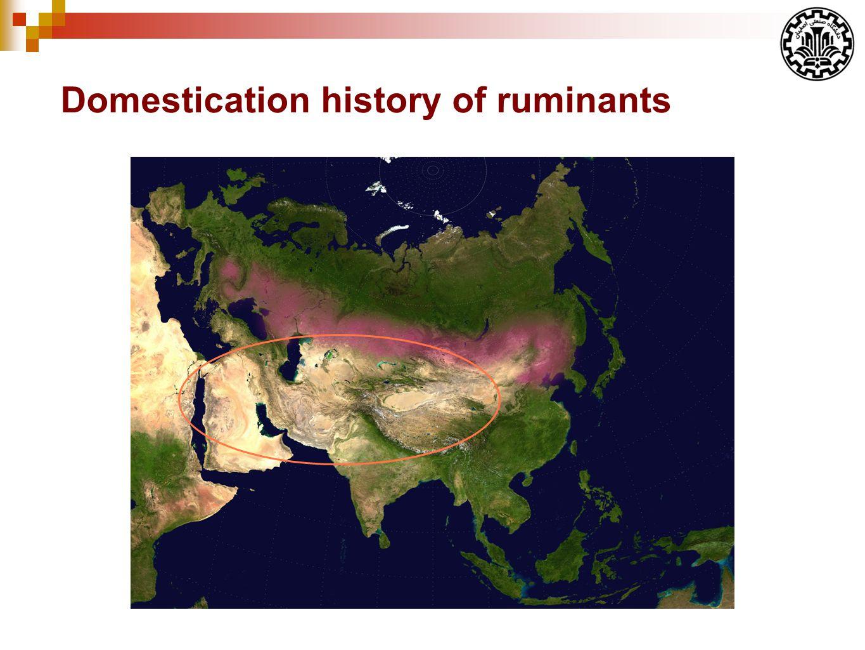 Domestication history of ruminants
