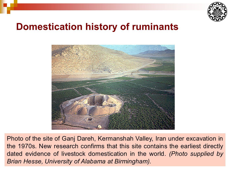 Photo of the site of Ganj Dareh, Kermanshah Valley, Iran under excavation in the 1970s.