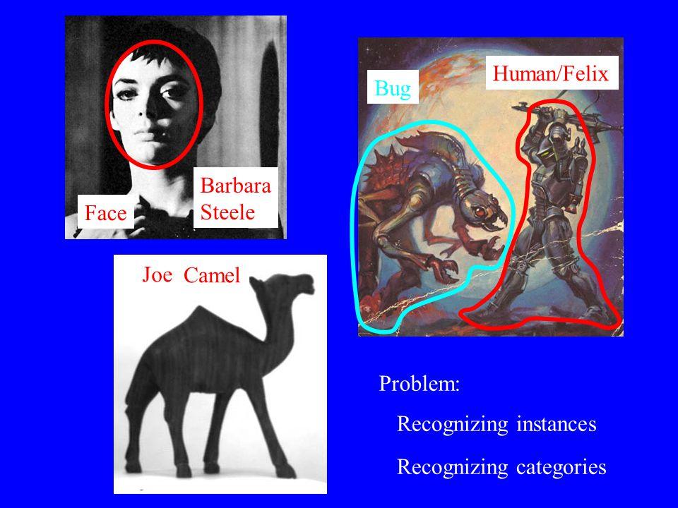 Face Camel Bug Human/Felix Joe Barbara Steele Problem: Recognizing instances Recognizing categories