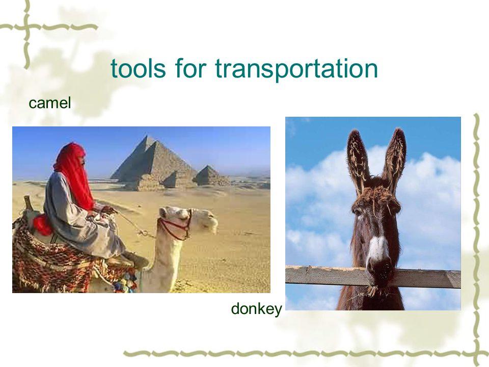 tools for transportation camel donkey