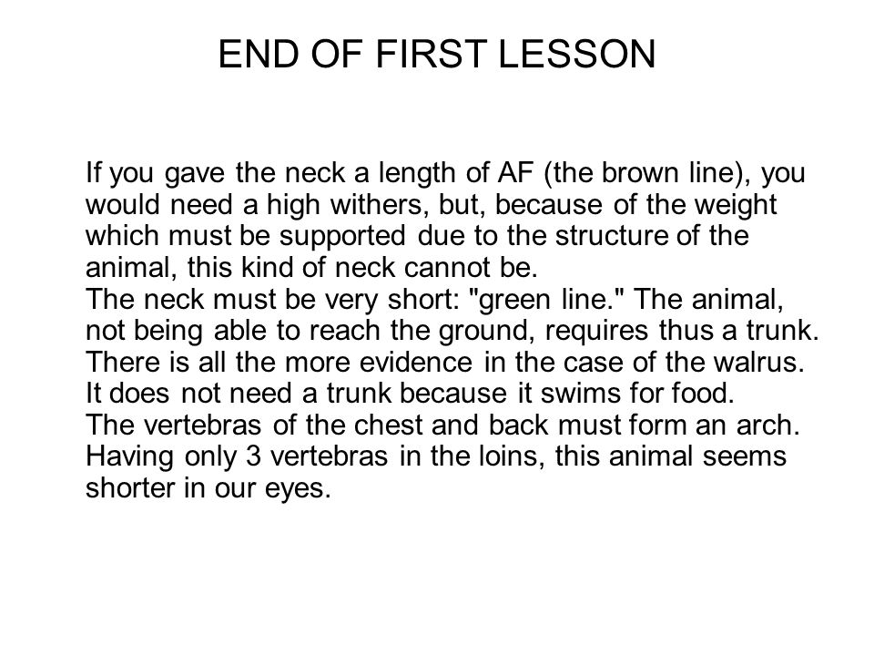 END OF FIRST LESSON If you gave the neck a length of AF (the brown line), you would need a high withers, but, because of the weight which must be supported due to the structure of the animal, this kind of neck cannot be.