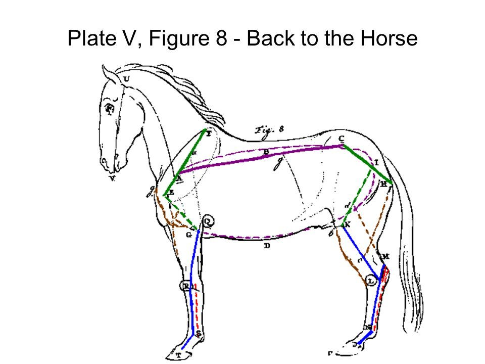 Plate V, Figure 8 - Back to the Horse