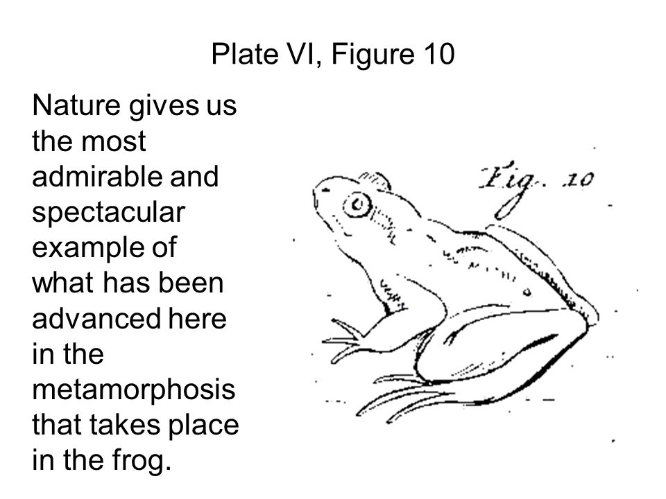 Plate VI, Figure 10 Nature gives us the most admirable and spectacular example of what has been advanced here in the metamorphosis that takes place in the frog.