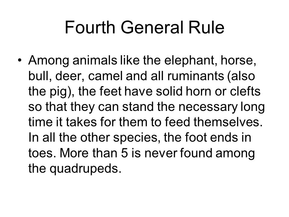Fourth General Rule Among animals like the elephant, horse, bull, deer, camel and all ruminants (also the pig), the feet have solid horn or clefts so that they can stand the necessary long time it takes for them to feed themselves.