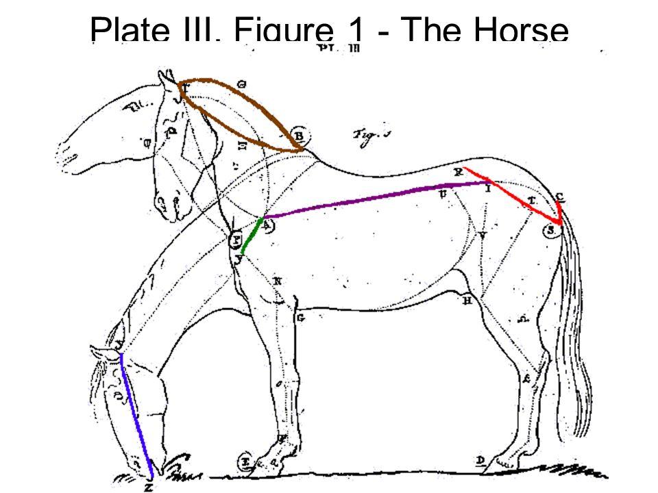 Plate III, Figure 1 - The Horse