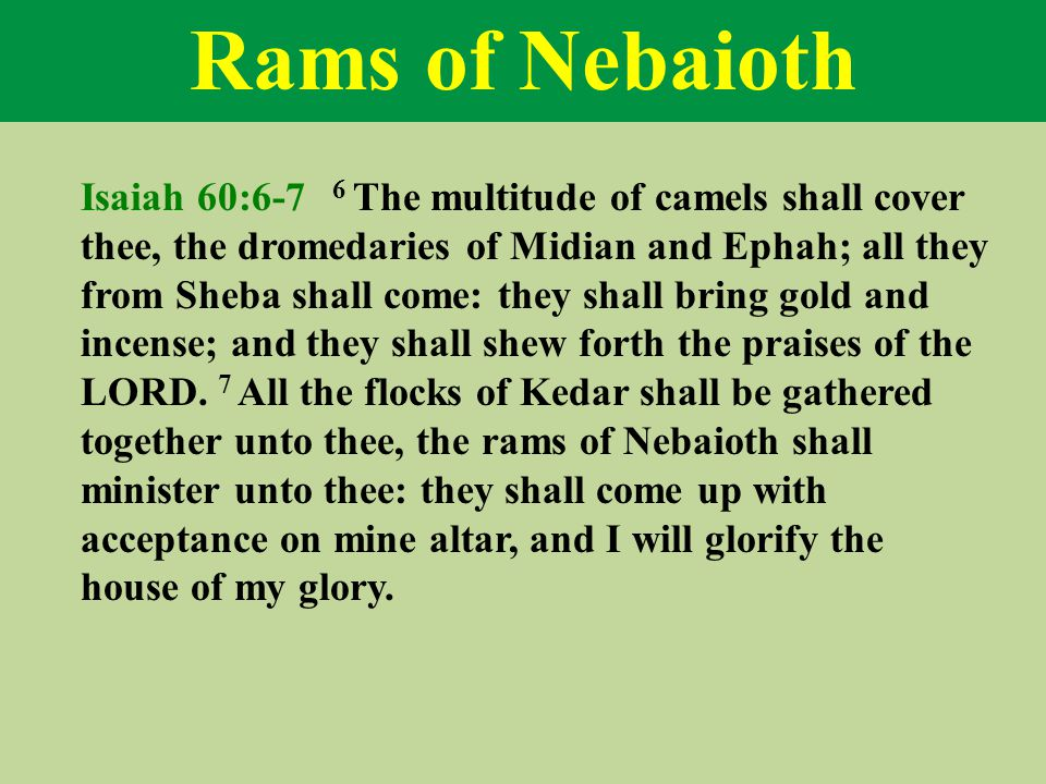Rams of Nebaioth Isaiah 60:6-7 6 The multitude of camels shall cover thee, the dromedaries of Midian and Ephah; all they from Sheba shall come: they shall bring gold and incense; and they shall shew forth the praises of the LORD.