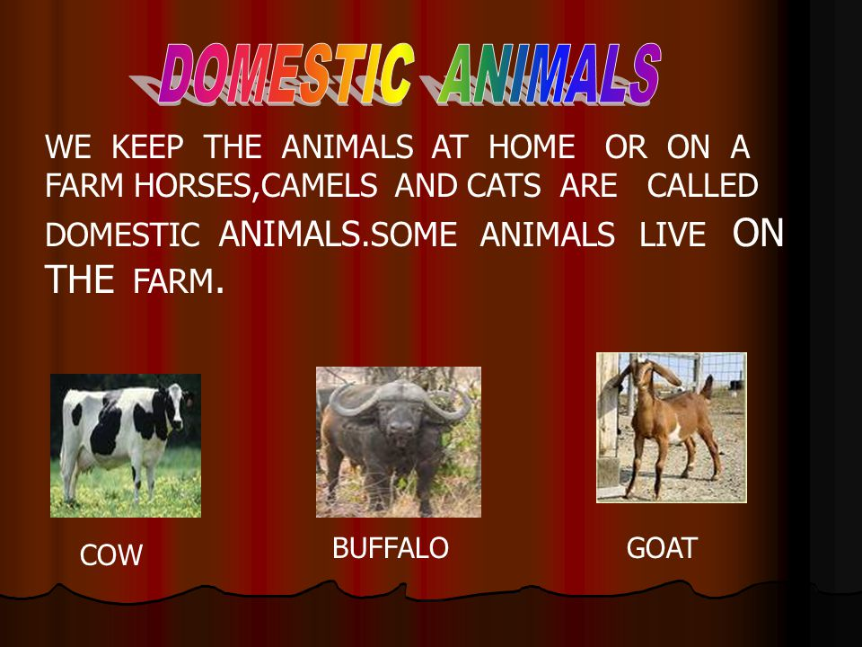 WE KEEP THE ANIMALS AT HOME OR ON A FARM HORSES,CAMELS AND CATS ARE CALLED DOMESTIC ANIMALS.SOME ANIMALS LIVE ON THE FARM. COW BUFFALOGOAT