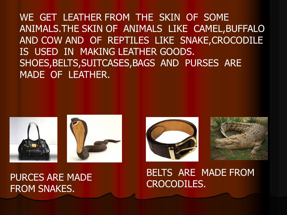 WE GET LEATHER FROM THE SKIN OF SOME ANIMALS.THE SKIN OF ANIMALS LIKE CAMEL,BUFFALO AND COW AND OF REPTILES LIKE SNAKE,CROCODILE IS USED IN MAKING LEA