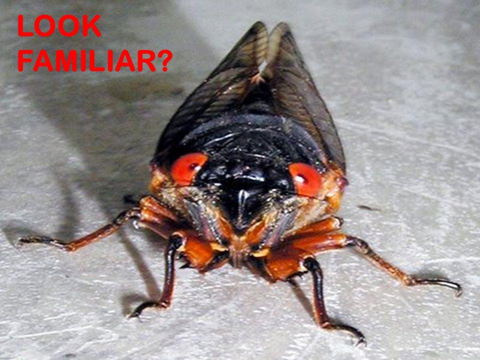 Good Bug or Bad BugGood Bug or Bad Bug LOOK FAMILIAR