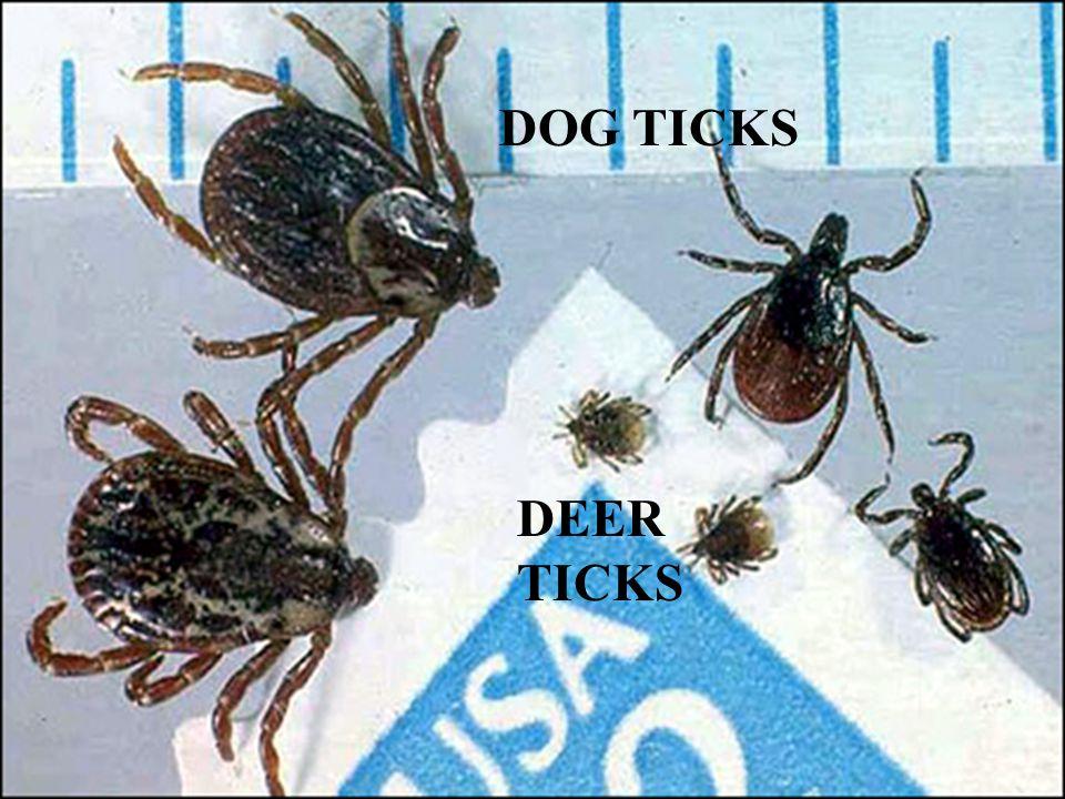 Tick TypesTick Types DOG TICKS DEER TICKS