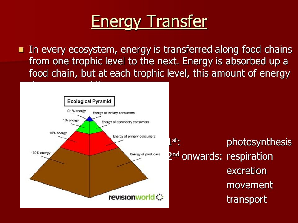 Energy Transfer In every ecosystem, energy is transferred along food chains from one trophic level to the next. Energy is absorbed up a food chain, bu
