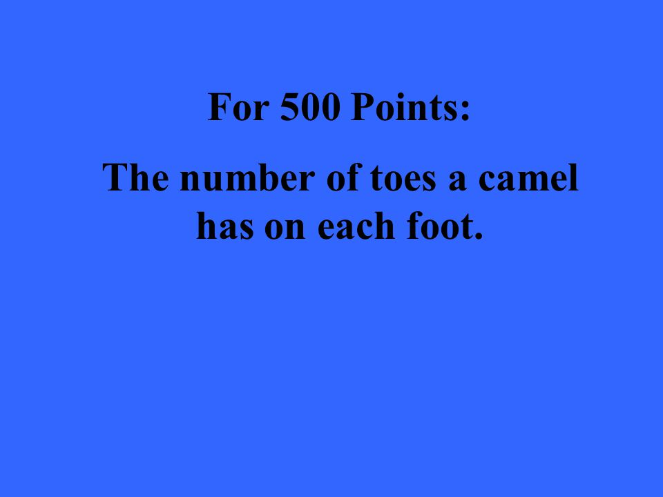 For 500 Points: The number of toes a camel has on each foot.