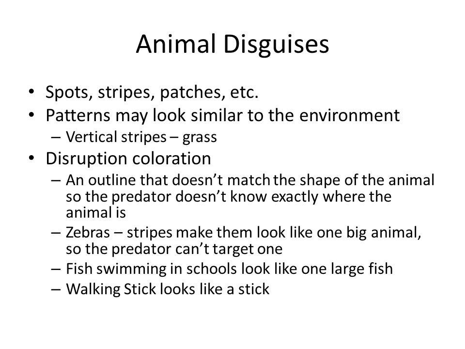 Animal Disguises Spots, stripes, patches, etc.